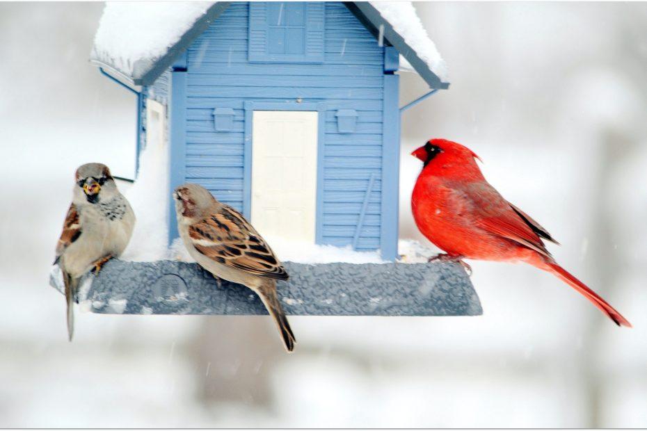 Winter birds the the feeder